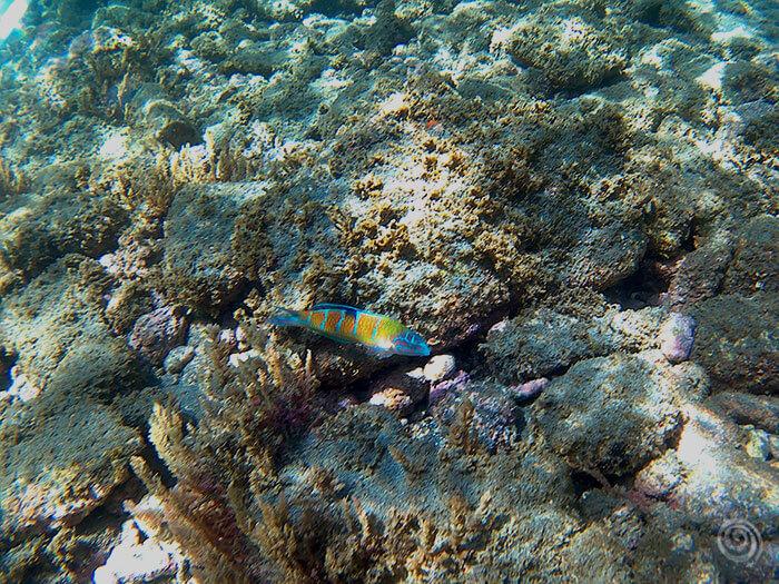 Snorkel Sao Miguel Azores