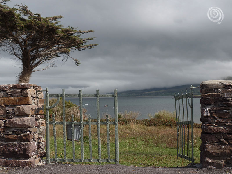 playa dingle en irlanda con árbol y cerja de hierro